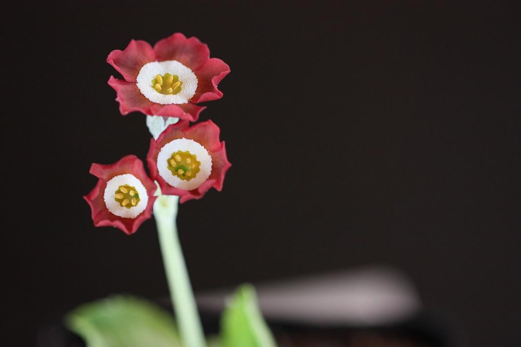 Les fleurs chez Pinco - Page 2 Img_4440